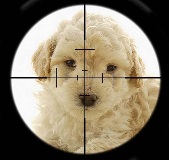 Eliminate Poodle