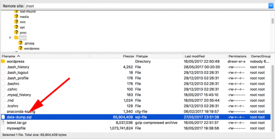Export SQL Database